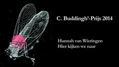 Buddingh Hannah (2014)
